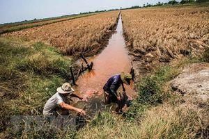 Hà Lan sẽ chia sẻ kinh nghiệm 700 năm quản lý nước với ĐBSCL