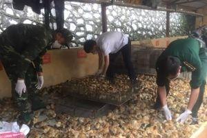 Đồn Biên phòng cửa khẩu Chi Ma thu giữ 3.000 con gà giống nhập lậu