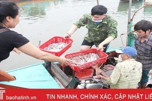 Mực tươi đầu mùa đắt đỏ, ngư dân Hà Tĩnh phấn khởi ra khơi