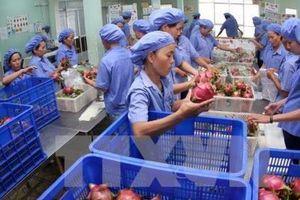 Nông sản, thực phẩm Việt Nam có nhiều cơ hội xuất khẩu vào châu Âu