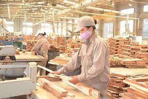 Bắc Kạn sắp có nhà máy sản xuất gỗ 180 tỷ đồng
