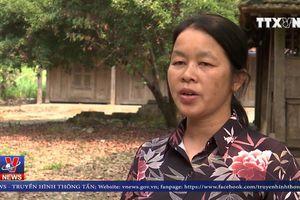 Xuất hiện thêm ổ dịch tả lợn châu Phi tại Sơn La