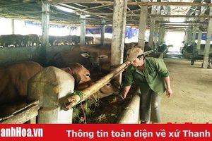 Xã Ngọc Phụng tập trung phát triển chăn nuôi gia súc