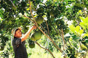 Xã Ninh Tây: Khó khăn trong chuyển đổi cây trồng