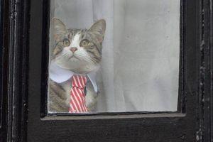 Con mèo của nhà sáng lập WikiLeaks ở đâu khi ông bị bắt?