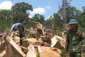 Bắt giữ thêm bốn đối tượng phá rừng quy mô lớn ở Đắk Lắk
