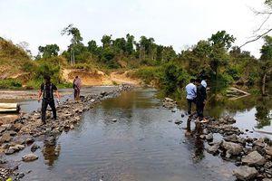 Cá ở Gia Lai chết bất thường nghi do nhà máy mỳ ở Kon Tum gây ra