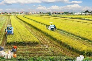 Thanh Hóa thu hút hơn 19.811 tỷ đồng đầu tư vào nông nghiệp nông thôn