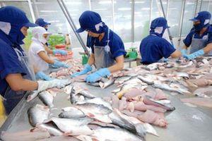 Giá cá tra tại Đồng bằng sông Cửu Long 'đảo chiều'
