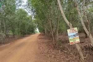 'Cò đất' không còn tung hoành ở khu vực dự án Sân bay Phan Thiết