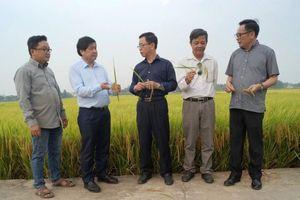 Các mô hình chuyển đổi cây trồng trên đất lúa đạt hiệu quả cao