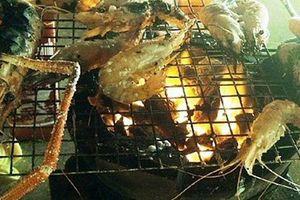 Đắm đuối với tôm cá dưới sông Cổ Chiên