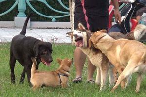 Chó cắn chết người: Hậu quả đau lòng do nhờn luật