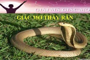 Nằm mơ thấy rắn là điềm báo gì, lành hay dữ ra sao?