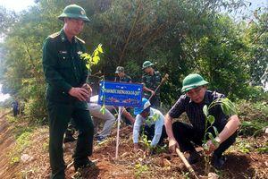 Quảng Trị phát động 'Ngày hội xuống ruộng trồng hoa dã quỳ'