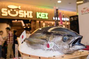 Xuất hiện cá ngừ khủng 100kg tại sự kiện 'Sashimi Kei' của nhà hàng Sushi Kei
