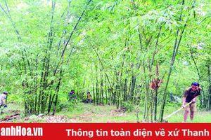Giá trị sản xuất lâm nghiệp huyện Lang Chánh đạt trên 57 tỷ đồng