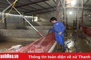 Hiệu quả từ mô hình tổ hợp tác chăn nuôi VietGap tại xã Hoằng Phượng