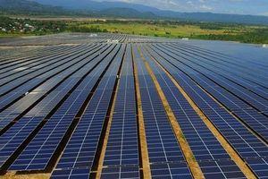 GEC đặt trọng tâm điện mặt trời và đa dạng sang điện gió trong năm 2019