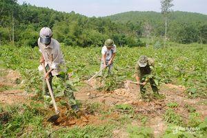 Nghệ An: Diện tích rừng sản xuất tăng gần 34 nghìn ha