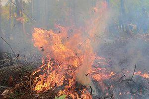 Nguy cơ cháy rừng ở Phú Yên đang ở cấp cực kỳ nguy hiểm