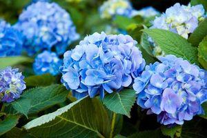Những loài hoa tượng trưng cho sự may mắn, tài lộc đến gia đình