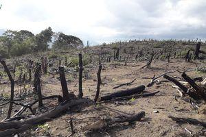 Gia Lai: Phát hiện hơn 4 ha rừng bị đốt phá
