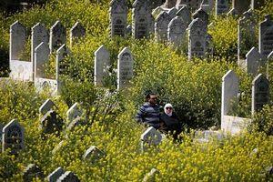 Syria: Xót xa hình ảnh hoa cỏ nở rộ trong các thành phố bị chiến tranh tàn phá
