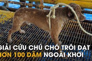 Chú chó 'lạc trôi' gần 220km trên biển trước khi được giải cứu