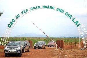 Thaco dự chi hơn 1.000 tỷ đồng mua cổ phiếu công ty nông nghiệp của Bầu Đức