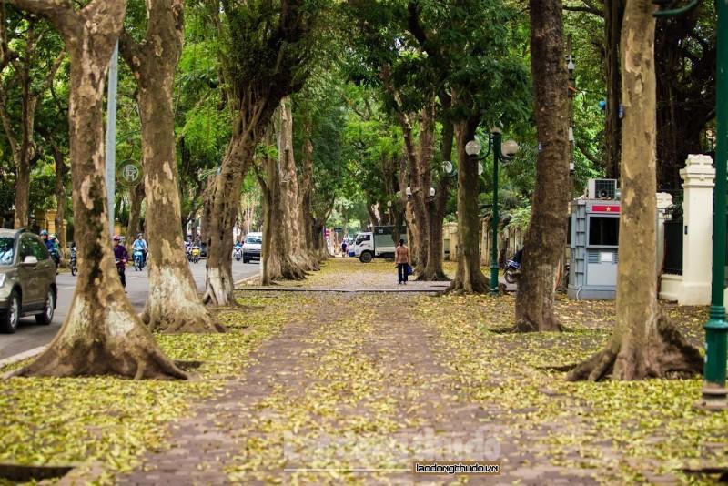 Đường Phan Đình Phùng đẹp nao lòng mùa cây thay lá