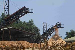 Bình Định: Dân khốn khổ vì sống gần Nhà máy viên nén gỗ, băm dăm của Công ty CP Nguyệt Anh