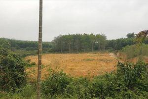 Giám đốc chiếm đất rừng làm 'trang trại mẫu cho dân làm theo'?
