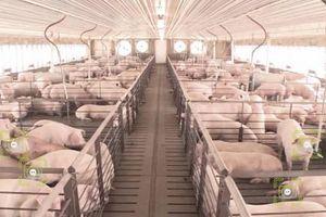 Ứng dụng công nghệ blockchain, người tiêu dùng dễ dàng giám sát sản phẩm chăn nuôi