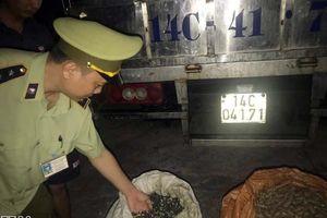 Phát hiện xe tải vận chuyển hơn 1,3 tấn ốc nhập lậu từ Trung Quốc