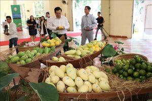 Việt Nam xuất khẩu lô xoài đầu tiên sang thị trường Mỹ