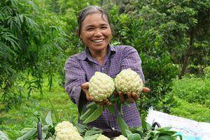 Lạng Sơn: Cả làng trồng quả 'mở mắt' thu gần 100 tỷ đồng mỗi năm
