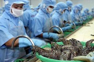 DOC công bố mức thuế sơ bộ về 0% với tôm Việt Nam: Thúc đẩy khả năng ký kết thêm đơn hàng