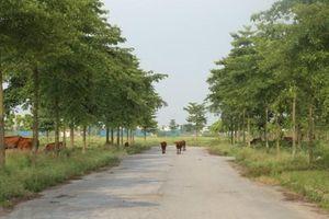 Thủ tướng yêu cầu làm rõ 2.000 ha đất bỏ hoang ở Mê Linh