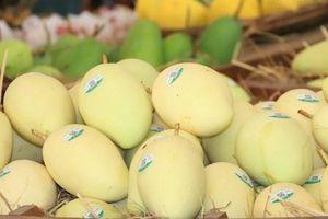Xoài Việt Nam chính thức xuất khẩu sang thị trường Mỹ
