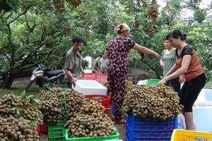 Xã Bình Kiều (Khoái Châu, Hưng Yên): Tích cực hoàn thiện, cán đích nông thôn mới