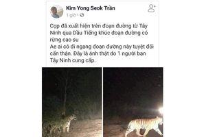 Hổ xuất hiện tại Tây Ninh, Bình Dương là tin thất thiệt