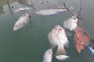 Kênh nước hóa xanh khiến cá chết hàng loạt