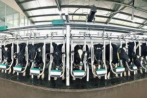 Giá sữa bột tăng cao, Vinamilk ước tính lợi nhuận giảm