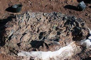 Argentina phát hiện nghĩa địa khủng long hóa thạch 220 triệu năm