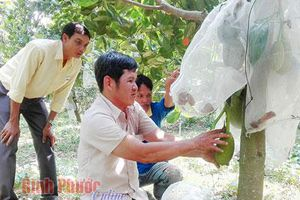 Bình Phước: Trồng mít Thái, lùng sục mua trái, báo giá, nhảy giá như giá vàng