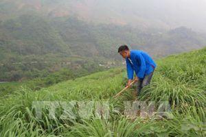 Hướng thoát nghèo mới cho nông dân Lào Cai