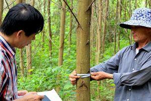 Giải pháp để XK gỗ đạt mục tiêu: Nâng cao đời sống người trồng rừng