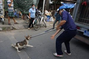 Quản lý nghiêm chó thả rông ở đô thị: Đánh trống bỏ dùi