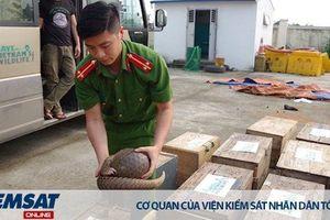 39 cá thể Tê tê vận chuyển trái phép bị bắt giữ